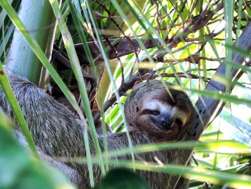 sloth monkey