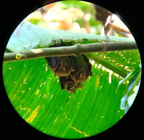 close up of baby bats