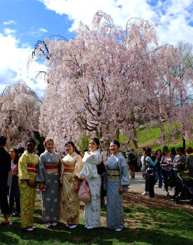 sakura - kimonos1