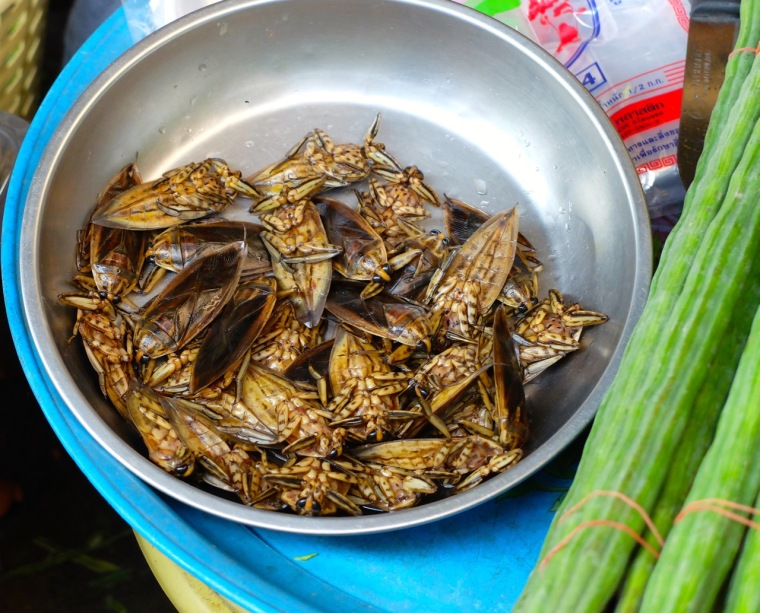 bamboo beetles
