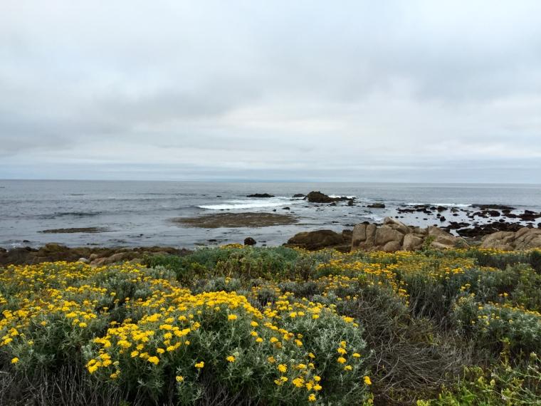 Monterey - 1 (27)