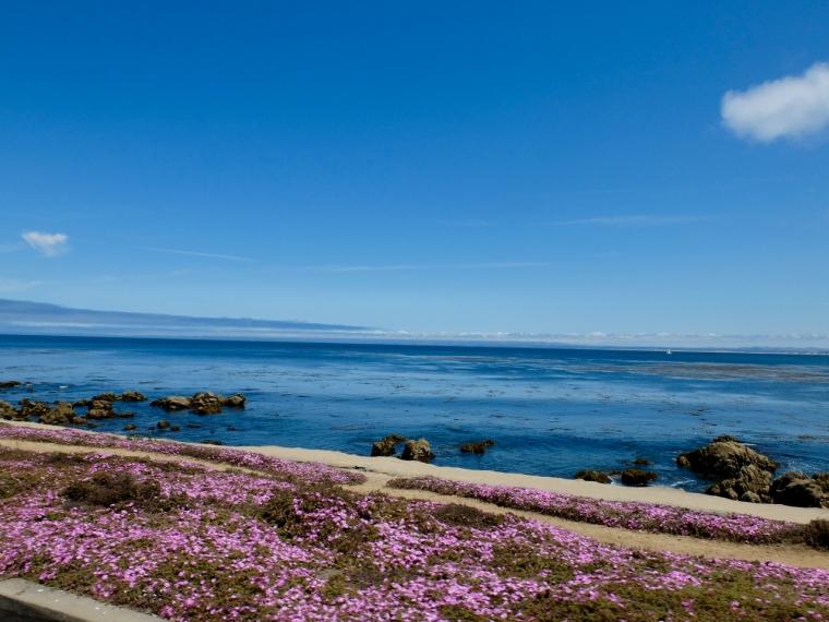 Monterey - 1 (8)